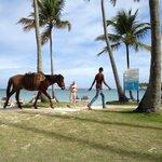 horses wandering the beach