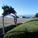 View of the ocean from one of the benches (it was not windy the tree is really like that :)