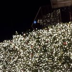Incredible tall & live Christmas tree at Fanuel Hall market place