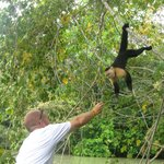 Feeding the Capuchin monkeys
