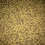 Stained carpet Rm 801