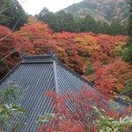 お寺を取り囲む見事な紅葉