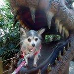 Dinosaur ate my baby!!! :)