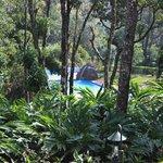Pool surrounded with lush green vegitation