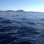 Pilot Whales in Los Cristianos