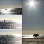 Horses @Camber sands (beach)