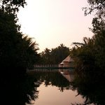 Peek out from mangrove delta