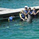 дельфинарий в открытом океане