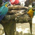 попугаи))