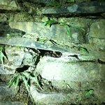 Tarántula de Monteverde