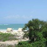 Beach Palapas