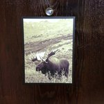 Moose on door