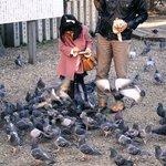 Feeding the pidgeons
