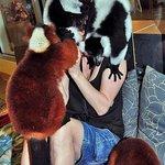 With Lemurs