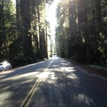 Redwood Higway