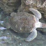 Schildkröten-Becken