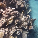 Coral Reef at Ras Mohamed National Part