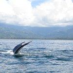 Whale watching from Uvita
