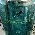 Тот самый аквариум в холле
