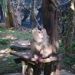 condizioni delle scimmie