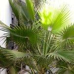 Hotel plants