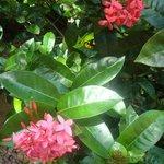 Coco Bay garden