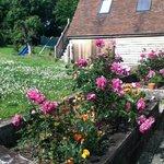 Roses at Rosebank
