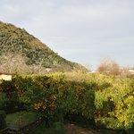 Вид на сад и горы