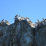 Bird colonies abound