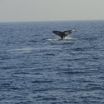 We named this beautifu grey whale Erica after my daughter who first spotted her.
