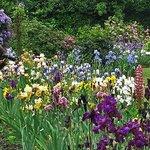 Photographers love Schreiner's Iris Gardens