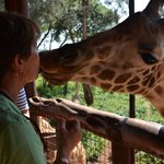 Kiss a Giraffe