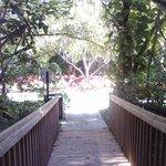 Boardwalk/Vegetation