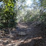 """""""hill"""" on sand Pine Trail (note the roots)"""