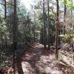 Sand Pine Trail