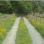 Entrance to Buttercup Meadow