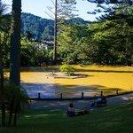 Looking toward the hotel across the Terra Nostra Garden hot spring