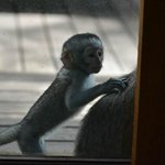 monkey outside our door2