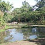 Zebras in the pond