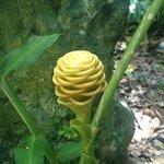 Unique island flora