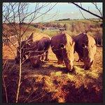 Rhinos chilling in the winter sun