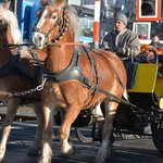 Horse and carriage ride from hotel