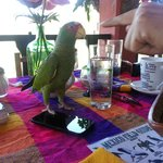 Diego, the wild parrot who came to visit our table