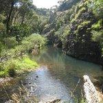 Scene from Totara North to Lane's Cove walk