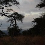 sunrise over Kilimanjaro, view from the trail at Sentrim Amboseli