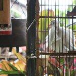 Die Tauben machen morgens beim Frühstück eine Menge Krach.