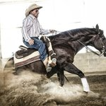 Reining Lessons