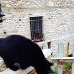 Gatti in Assisi