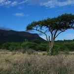 Die Savannen-Landschaft des Geländes von Moholoholo.