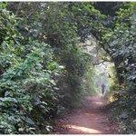 The Jungle trail